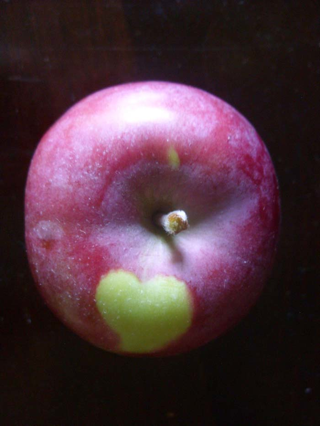 2.) Apples.